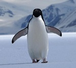 Google Penguin Update and Becoming Invincible To Changes